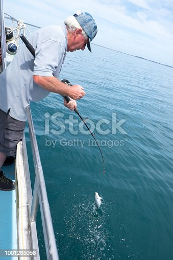 Retired male tourist catching a small fish on a fishing charter boat at Doubtless Bay, Far North District, Northland, New Zealand, NZ