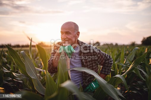 Old farmer looking at his life's work