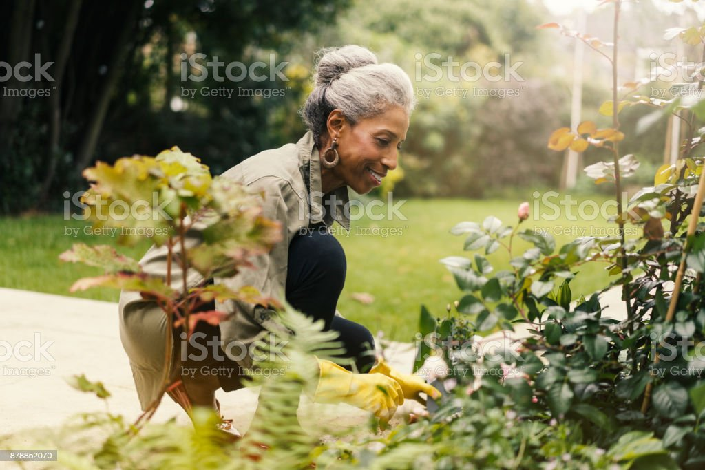 Retired senior woman gardening in back yard stock photo