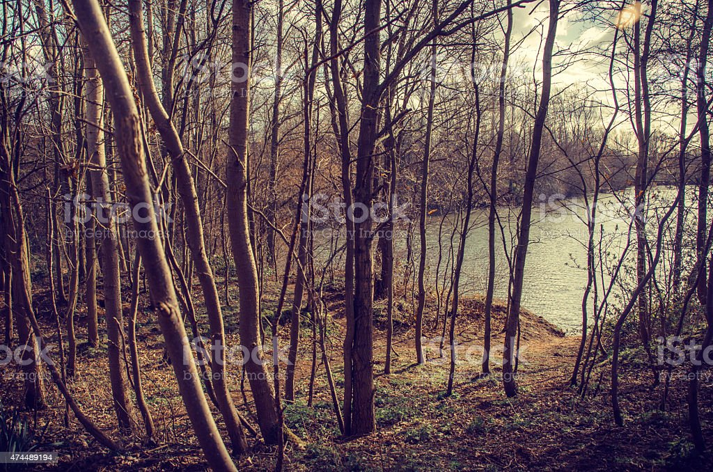 Retreat in the woods by the lakeshore stock photo