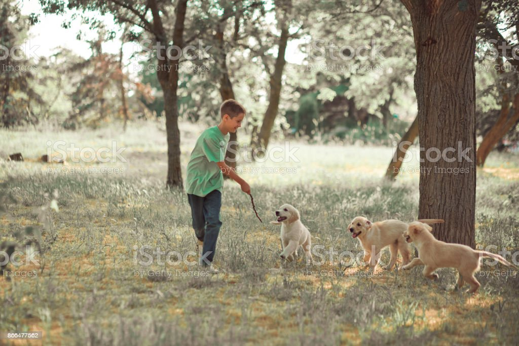 Retriever pup Lovely scene handsom teen boy enjoying summer time vacation with best friend dog ivory white labrador puppy.Happy airily careless childhood life in world of dreams stock photo