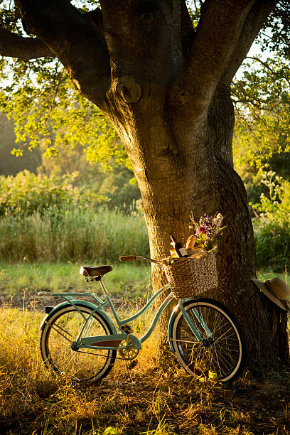 retro fahrrad mit rotwein in picknick-korb xxxl - romantisches picknick stock-fotos und bilder