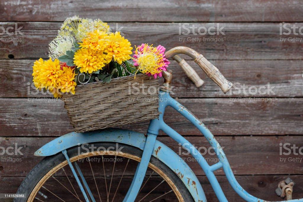 Rusty vintage blue bike with basket of flowers against barnwood...