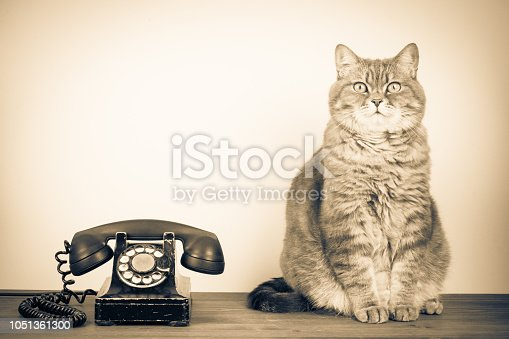Retro old telephone and big cat on table. Vintage style sepia photo