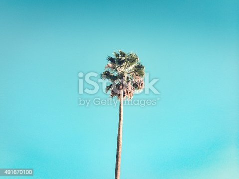 retro palm tree conjures summer in souther california.  horizontal mobilestock composition.