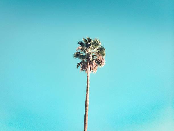 retro palm tree stock photo