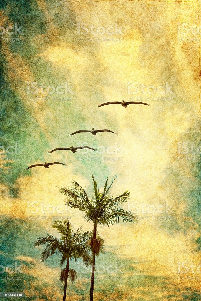 Retro Palms and Pelicans stock photo