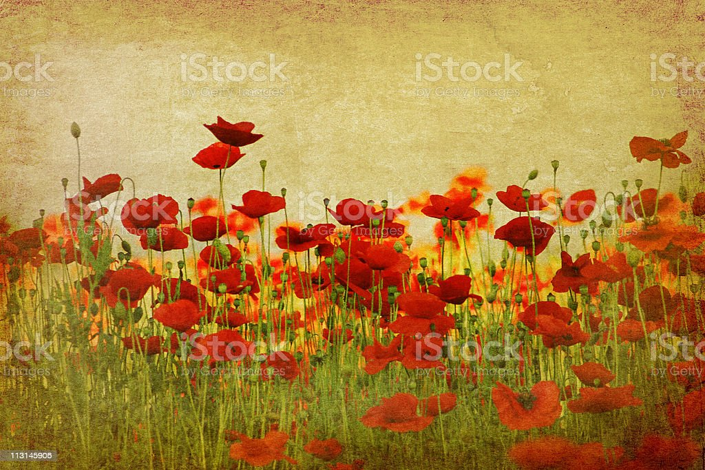 retro poppy field stock photo