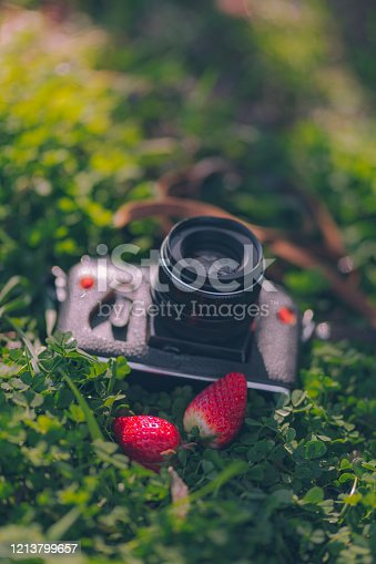 Retro professional film analog camera outdoors in the grass with strawberries stock photo