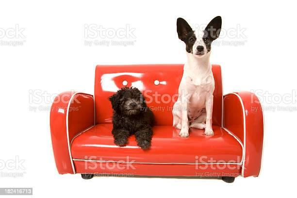 Retro puppies picture id182416713?b=1&k=6&m=182416713&s=612x612&h=qkqge58asm0dg6txferwcnf0jnnujlj mzohlbex po=