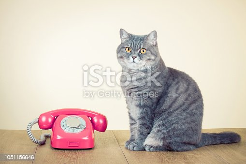 istock Retro rotary telephone and big cat on table. Old instagram style filtered photo 1051156646