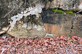 a retro stone warehouse wall with moss and dead fall leaves