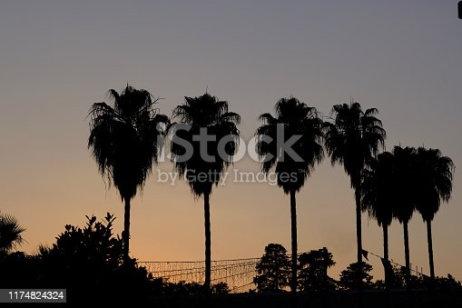 Image of palm trees. Silhouette image. Experiencing sunset. The sky is crimson and mixed colors.  Copy space or text patch area available. Palm Tree,Sunset,Beach,Silhouette,Dusk,Horizontal,Idyllic,  Landscape - Scenery,Multi Colored,Tropical Climate,Blue, Coconut,Front View,Horizon Over Water,Nature,No People,Outdoors,Photography,Saturated Color,Scenics - Nature,Sky,Summer,Sun,Sunlight,Tranquil Scene,Vacations, Vibrant Color Retro Style,Old-fashioned,Tourist Resort,Photography,Coastline,Idyllic,Island,Landscape - Scenery, Nature,No People,Non-Urban Scene,Orange Color,Outdoors,Palm Leaf,Panoramic,Summer,Sun,Sunlight,Travel,Tree,Tropical Tree, Vacations. Luxury,Tropical Climate,Scenics - Nature,Summer,Cityscape,Igniting,Landscape - Scenery,Leaf, Light - Natural Phenomenon,Lighting Equipment,Lightweight, Looking At View,Looking Through Window,Relaxation,Vacations,Back Lit,Beauty,Beauty In Nature,Cloud - Sky,Cloudscape,Cultures, Exoticism,Fire - Natural Phenomenon,Fog,Landscaped,Lighting Technique,Multi Colored,Nature,No People,Outdoors,Paradise,Photography,Resting,Romance,Sea, Season,Serene People,Silhouette,Sun,Sunlight,Thailand,Tourism, Tourist Resort,Tranquil Scene,Travel,Travel Destinations,Tropical Tree,