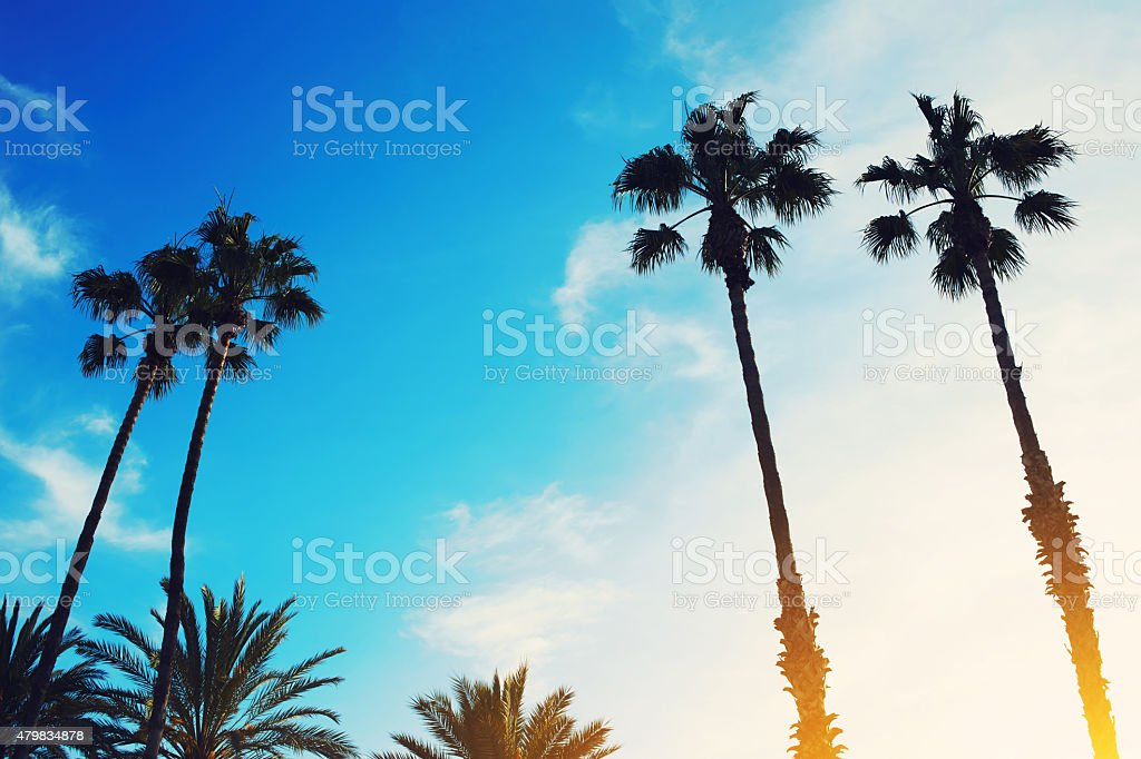 Retro style image of silhouetted lush palm trees stock photo