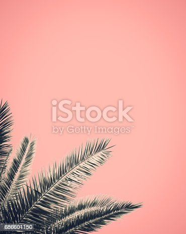 istock Retro Style Palm Tree Design 686601150