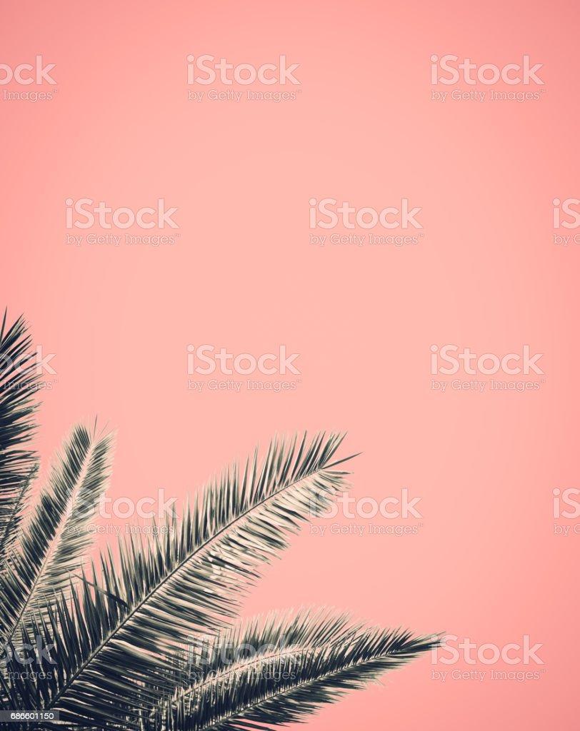 Retro Style Palm Tree Design stock photo
