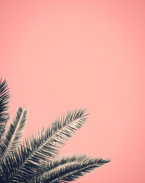style rétro palm tree design - motif tropical photos et images de collection
