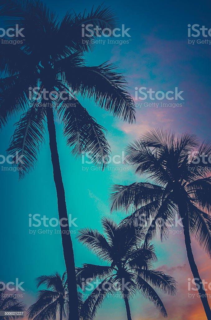 Retro Sunset Hawaii Palm Trees stock photo