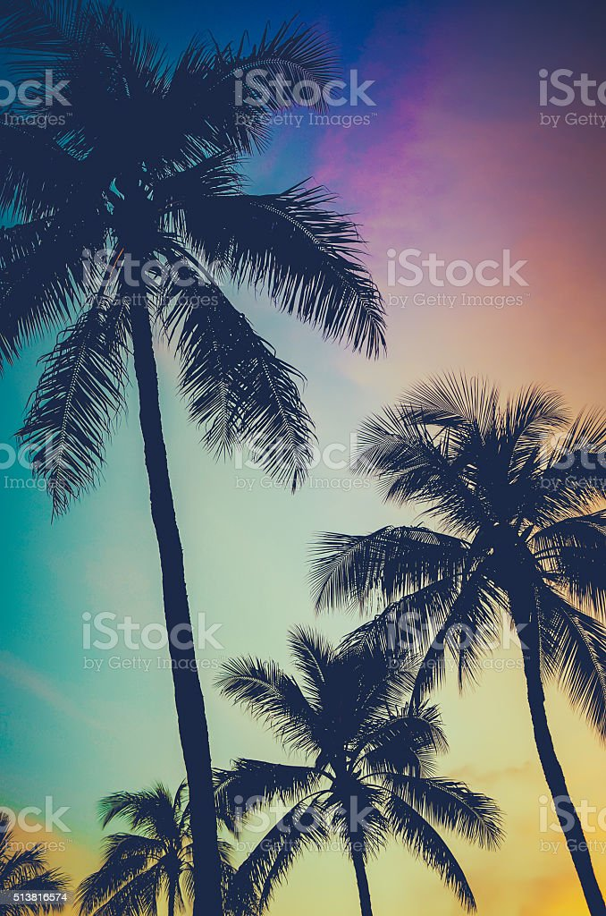 Retro Sunset Palm Trees stock photo