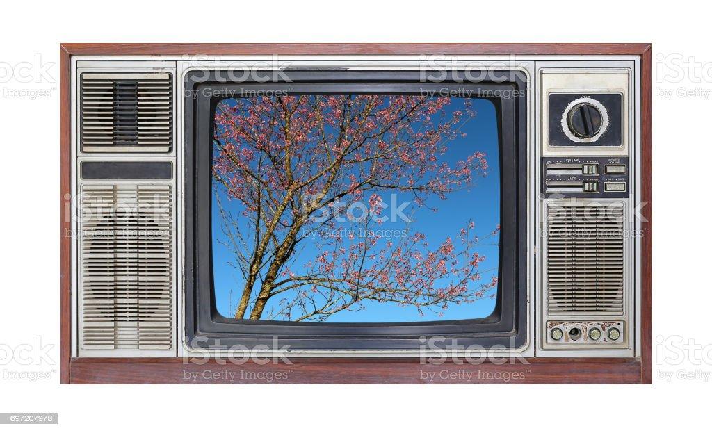Retro television on white background with image of sakura tree with blue sky on screen. stock photo