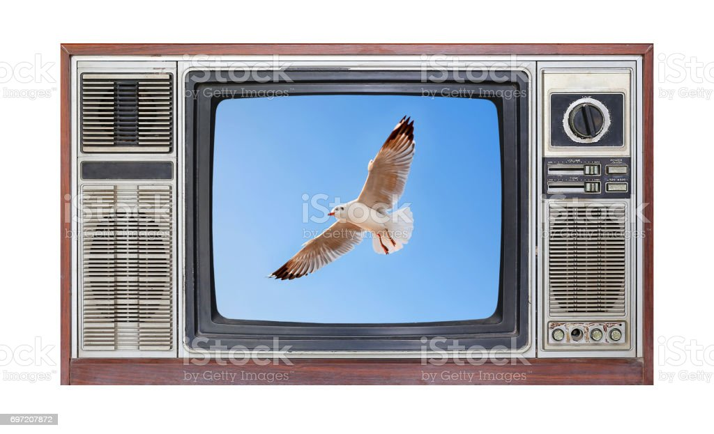 Retro television on white background with image of seagull flying in sky on screen. stock photo
