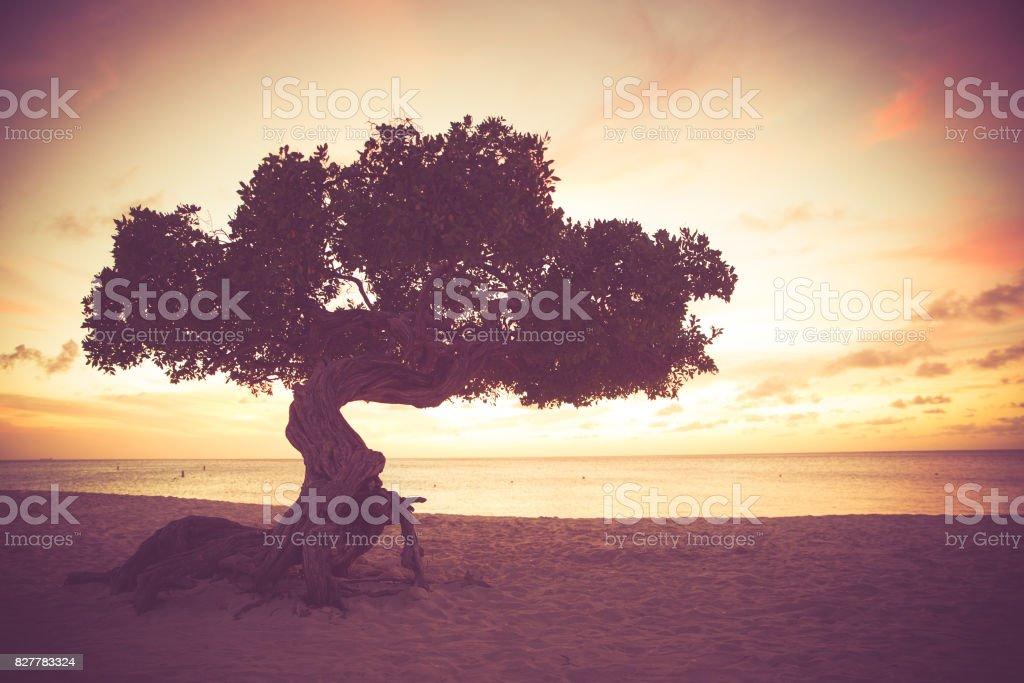 Retro Tone Divi Divi Tree stock photo