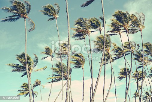 istock Retro Vintage Hawaii Palm Trrees In The Wind 522323856