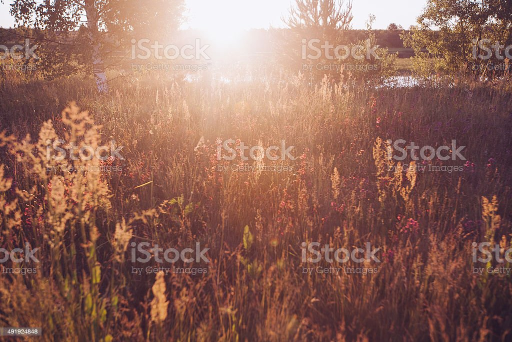 Retro Vintage Soft Focus With Grass And Flowers stock photo