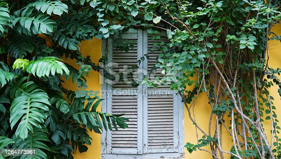 A window frame inside the botanic garden of Ho Chi Minh City Vietnam, together with tropical plants around