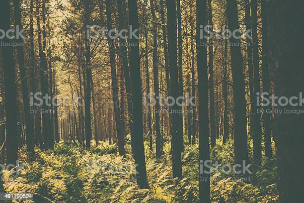 Retro woodland scene picture id491190804?b=1&k=6&m=491190804&s=612x612&h=3axvaueipa2jkss3naosb9xh9wokg0ixlsxykteb 68=