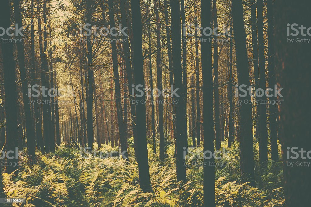 Retro Woodland Scene stock photo