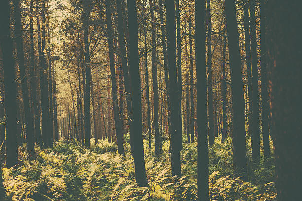 retro woodland scene - vintage nature stock photos and pictures