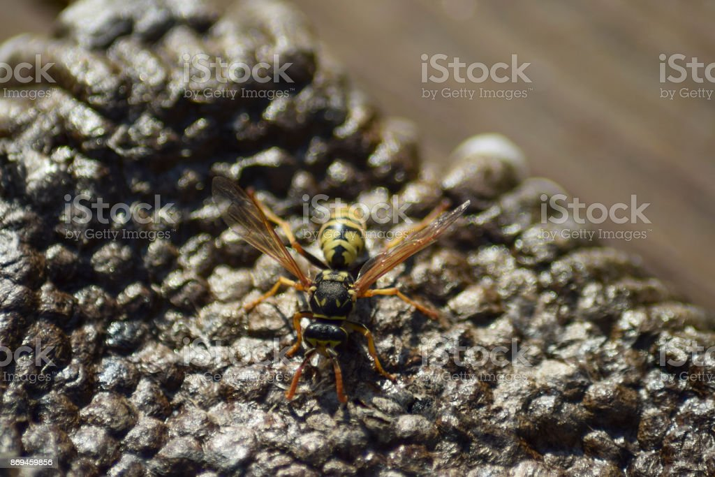 Reversed hornet's nest. stock photo