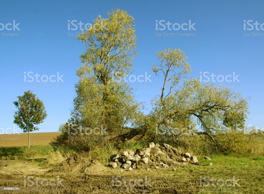 Reversed willow tree from spring season stock photo