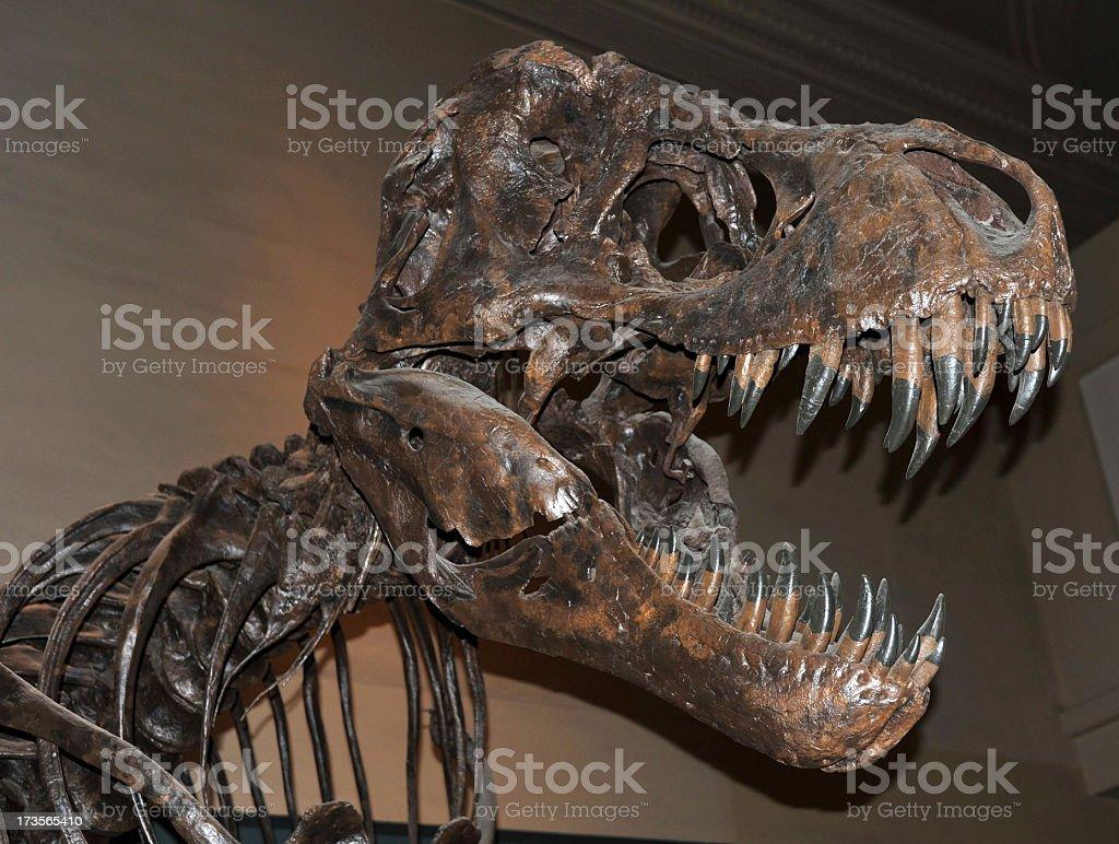 T Rex royalty-free stock photo