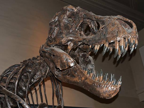 T Rex stock photo