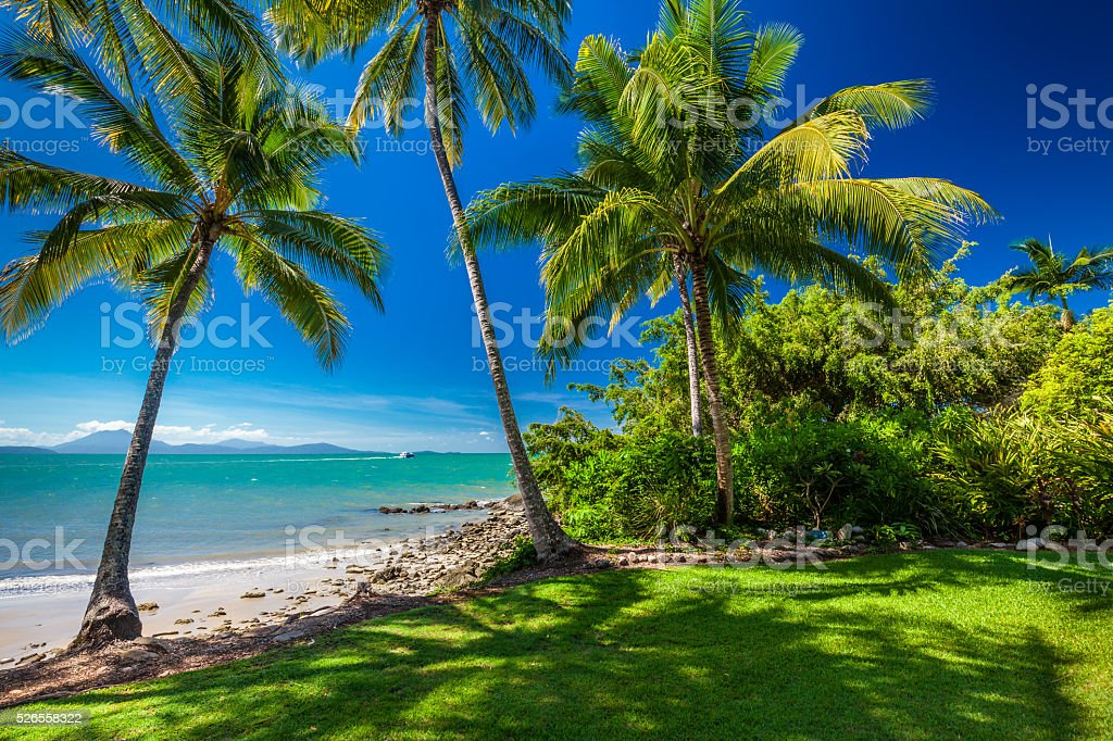 Rex Smeal Park in Port Douglas, palm trees and beach stock photo