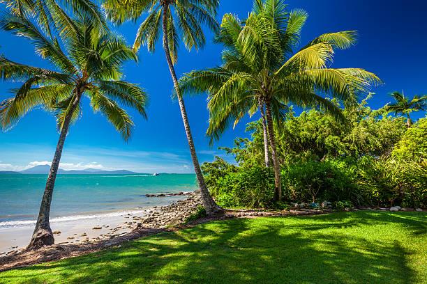 rex smeal parco a porta douglas, palme e spiaggia - queensland foto e immagini stock