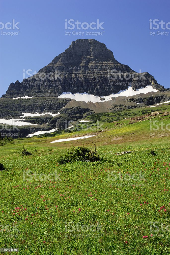 Reynolds Mountain View with Flowers royalty-free stock photo