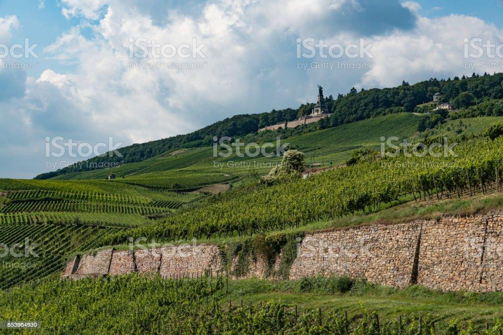 Rheingau Winegrowing Region Near Rüdesheim stock photo