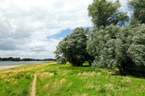 Rhine river near Zons and Benrath stock photo