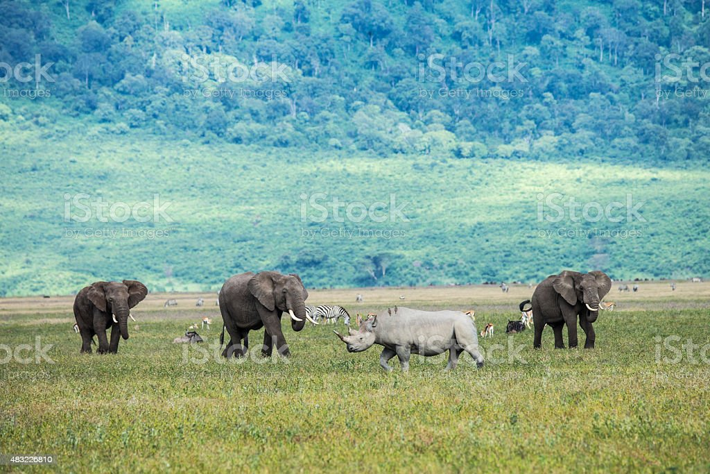Rhino and elephants in the Ngorongoro Crater Tanzania stock photo