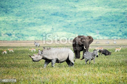 Rhino, elephant and Zebra  in the Ngorongoro Crater Tanzania