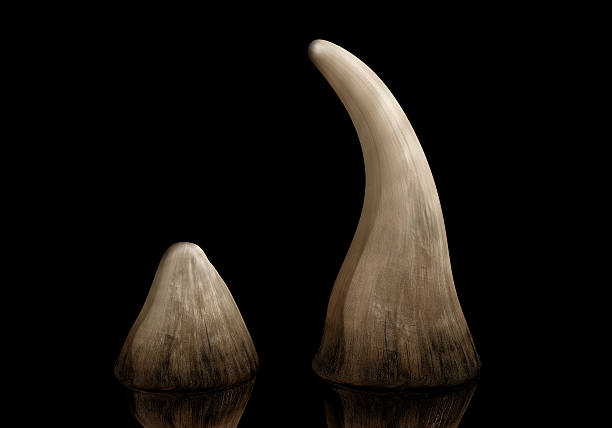 Rhino en corne - Photo