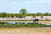 Photo of a gorup of African elephants in the Etosha National Park in Namíbia.