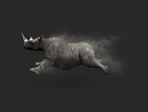 istock Rhino moving and jumping 886026338