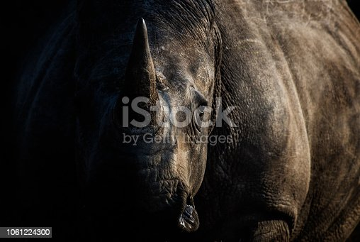 A moody shot of a rhinoceros