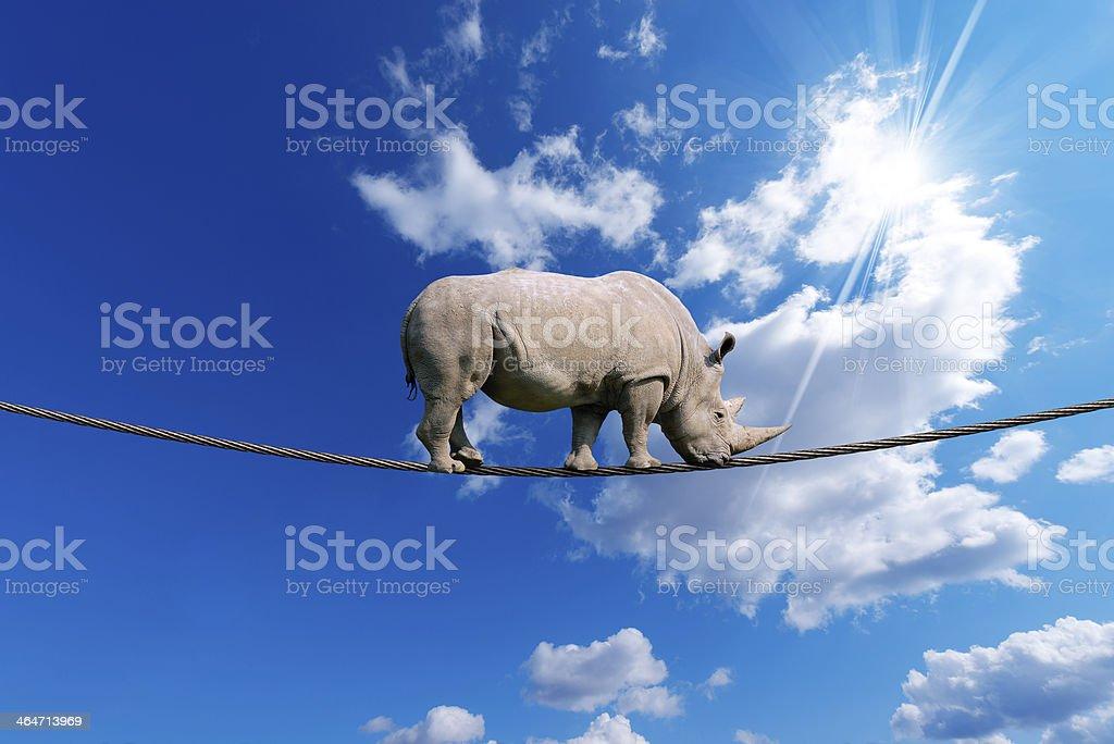 Rhino Walking on Rope stock photo