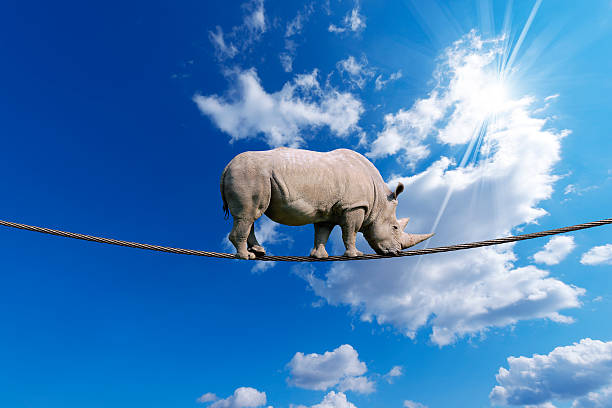 Rhino Walking on Rope stock photo