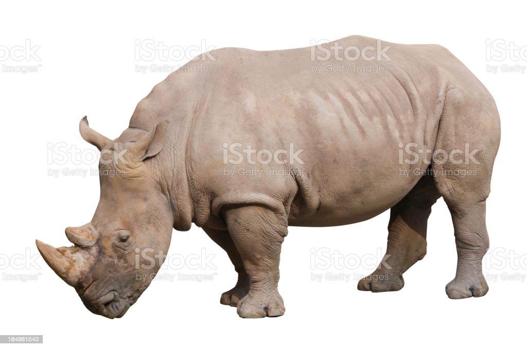 Rhino with path stock photo